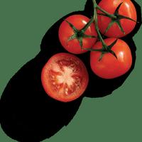 Логотип http://sushi-toki.ru