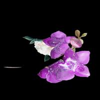 Логотип http://ellis-official.ru