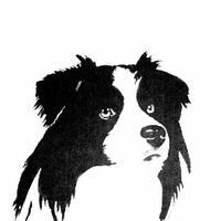 Логотип http://bordercollie-ncb.ru