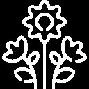 Логотип http://25tulips.ru
